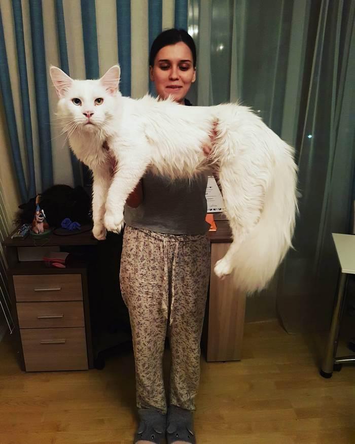 hug-cat-5