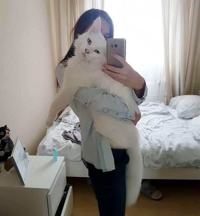 hug-cat-6