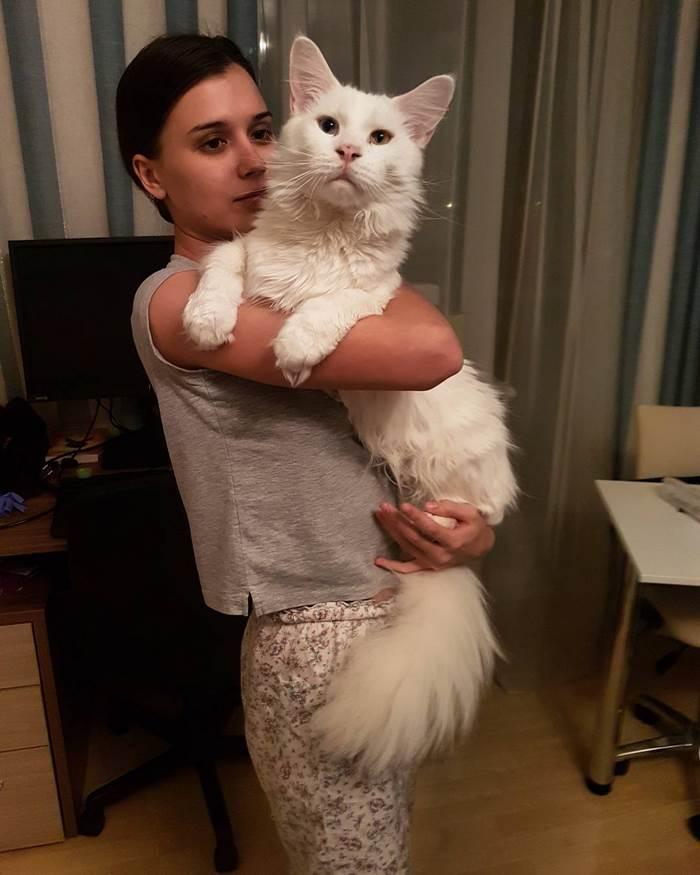 hug-cat-7