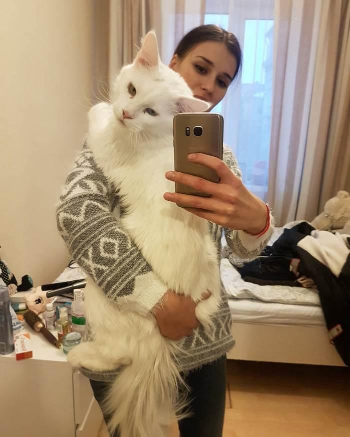 hug-cat-8