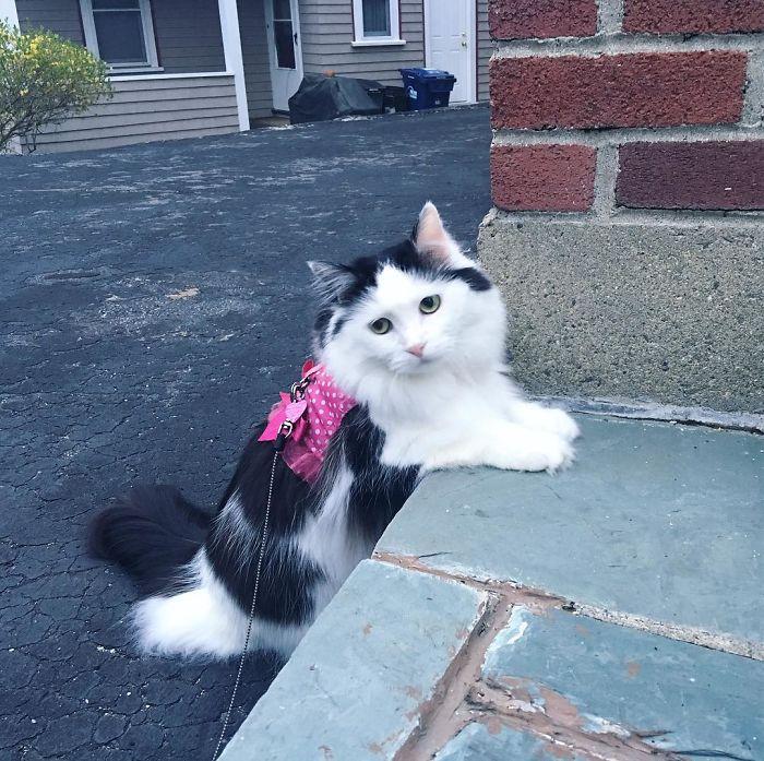 neighbor-cat-love-story-1