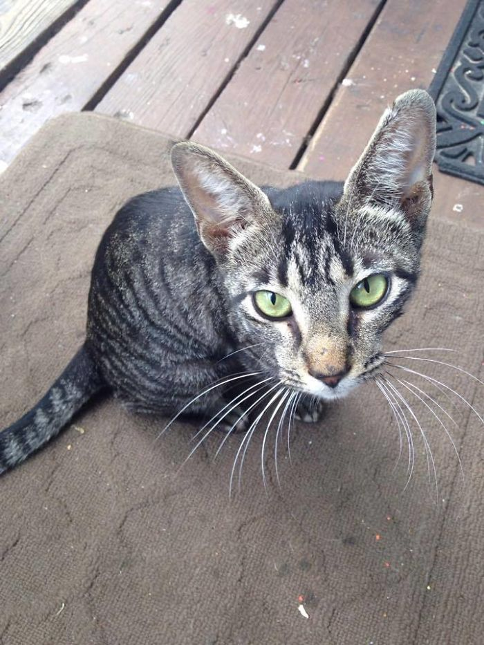 people-cared-stray-cat-2