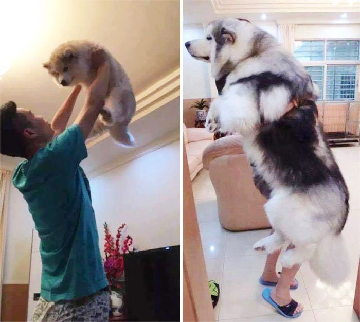 1-dogs-growing-up-adorable