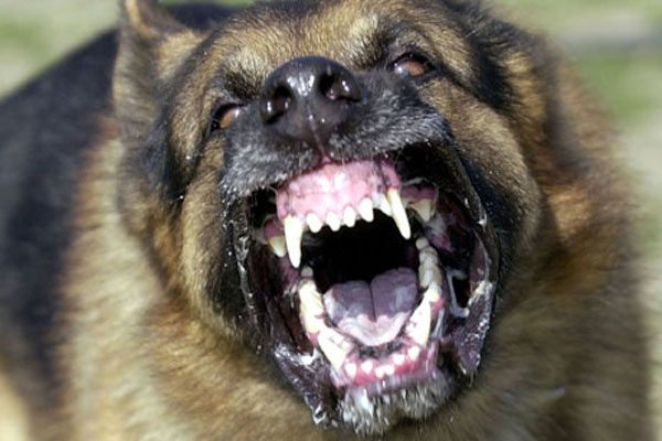10-most-dangerous-animals-in-usa