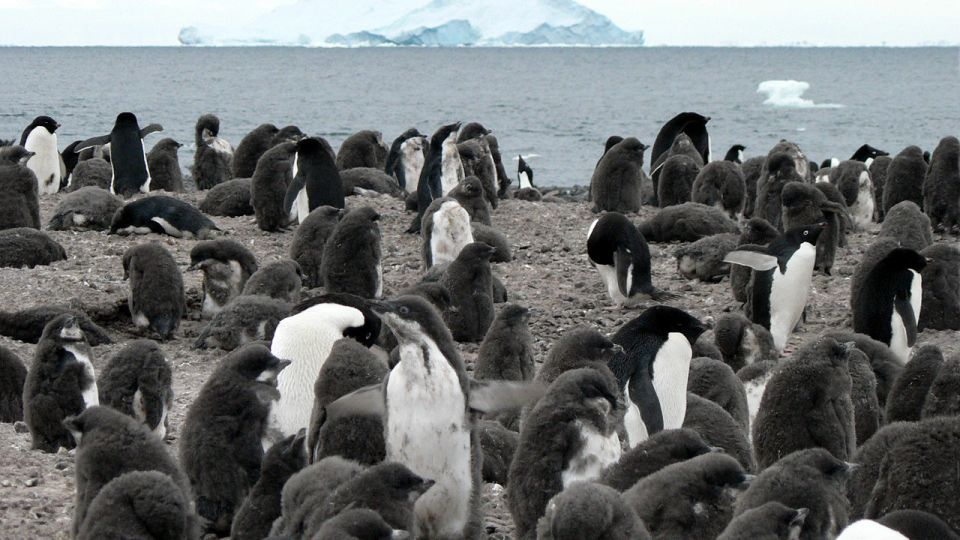 11-animals-extinction-climate-change