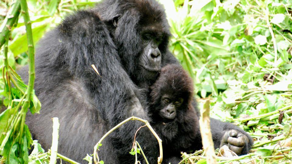 12-animals-extinction-climate-change