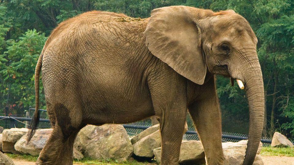 14-animals-extinction-climate-change
