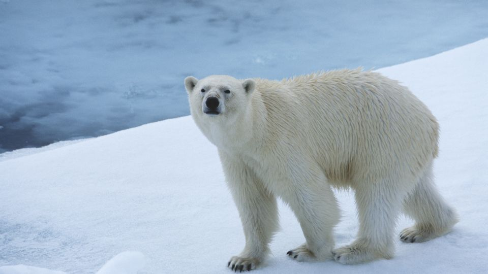 2-animals-extinction-climate-change