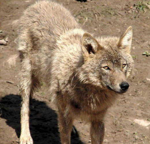 2-most-dangerous-animals-in-usa
