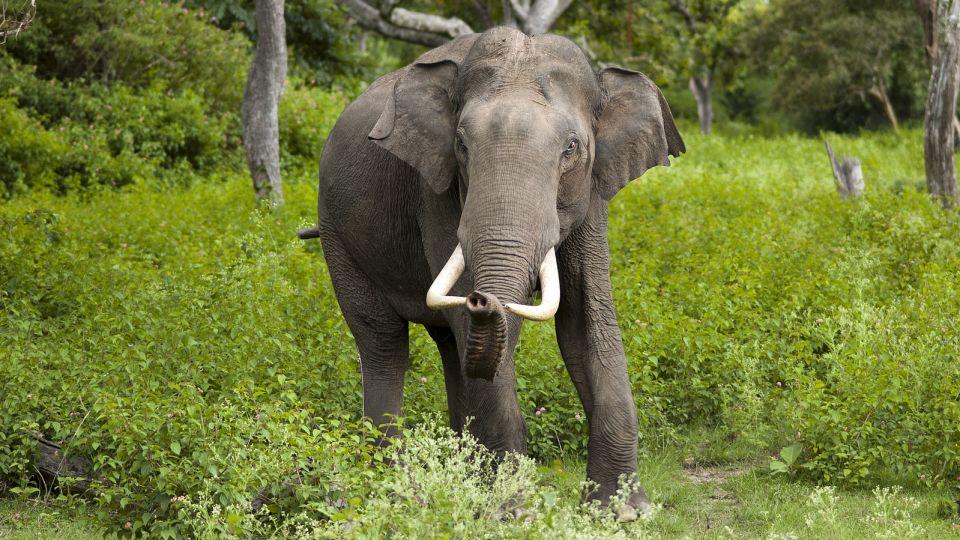 9-animals-extinction-climate-change
