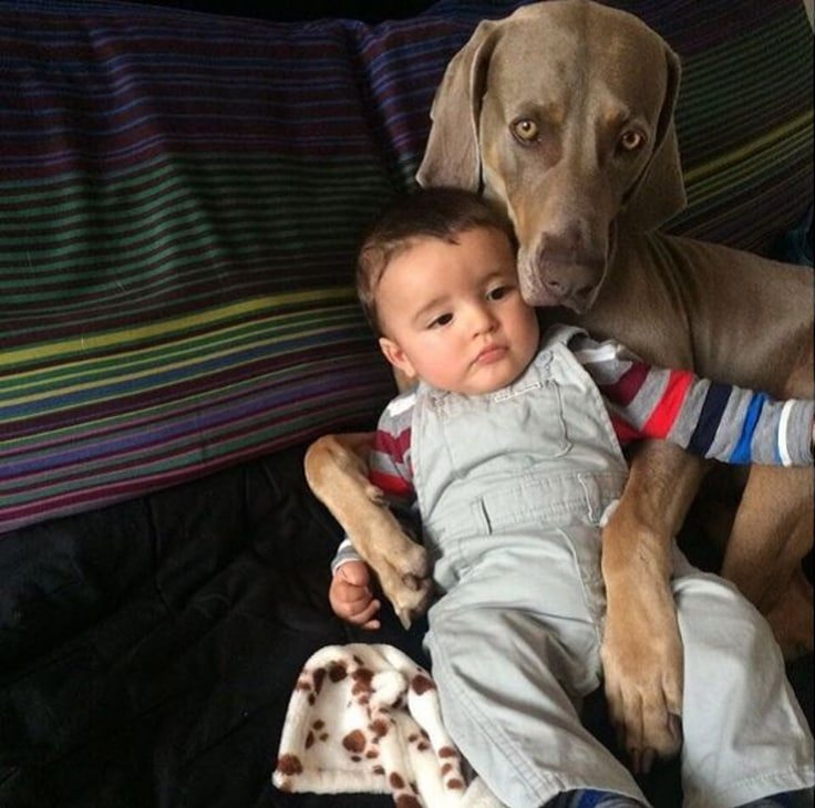 animal-babysitters-1