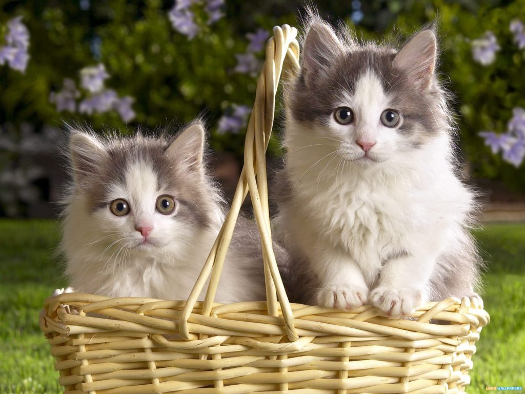 beautiful-cats