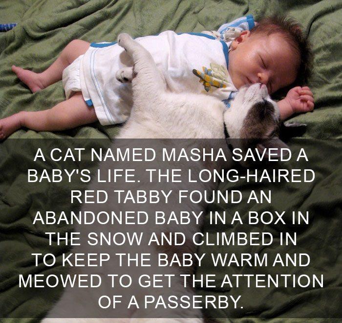 cat-facts-1