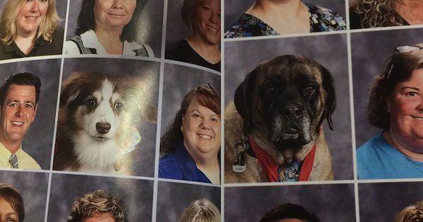 dog-in-school-pics-1