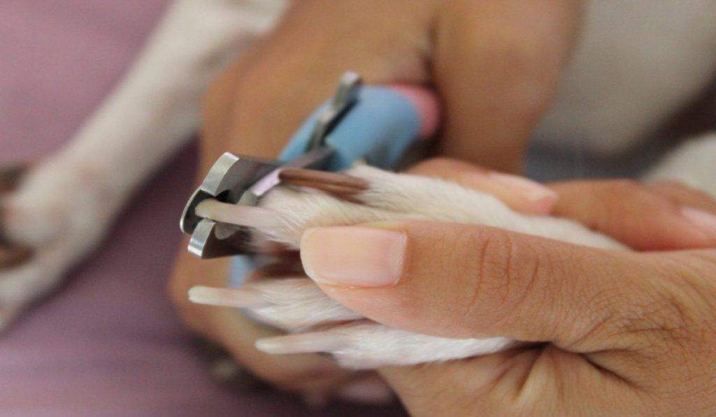 dog-nails