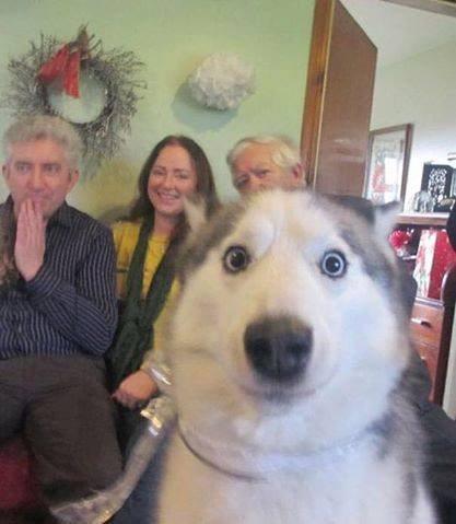 dog-photobombs-1