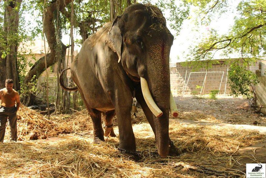 elephant-is-finally-safe-1