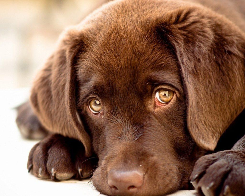 innocent-puppy-eyes