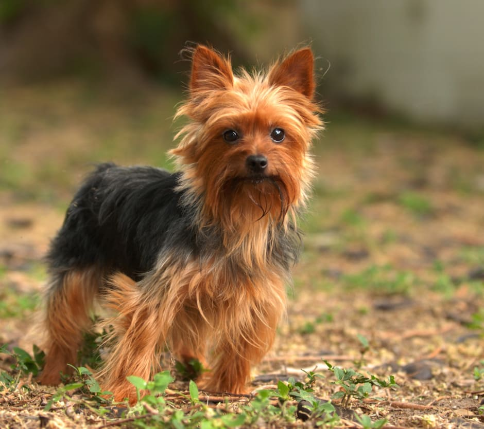 small-dogs-1