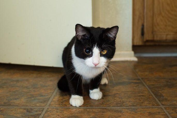 special-stray-cat-3