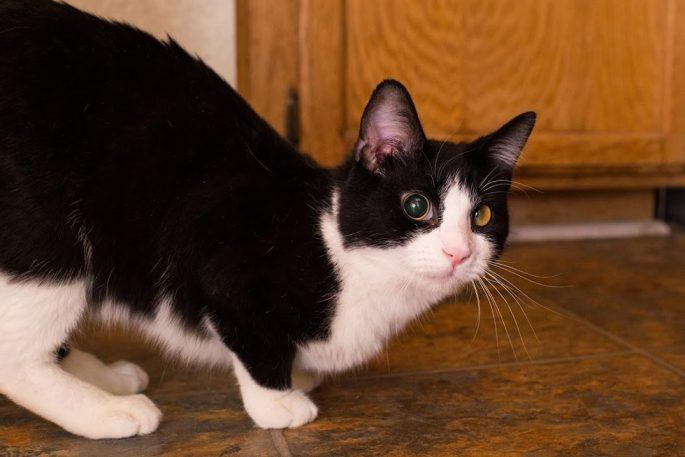 special-stray-cat-4
