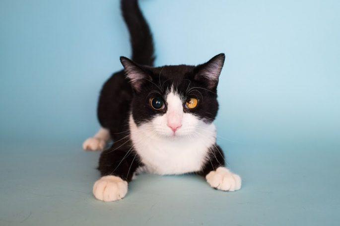 special-stray-cat-5