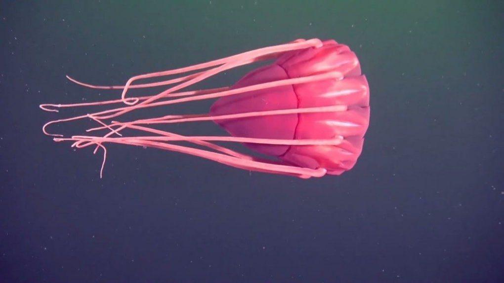 strange-sea-creatures-3