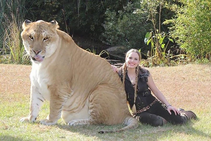 1-hyrbid-animals-shockingly-real