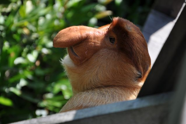 4-ugliest-animals-on-the-planet