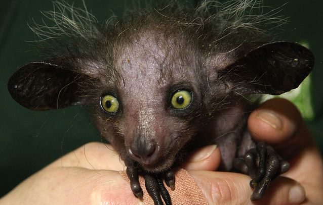 7-ugliest-animals-on-the-planet