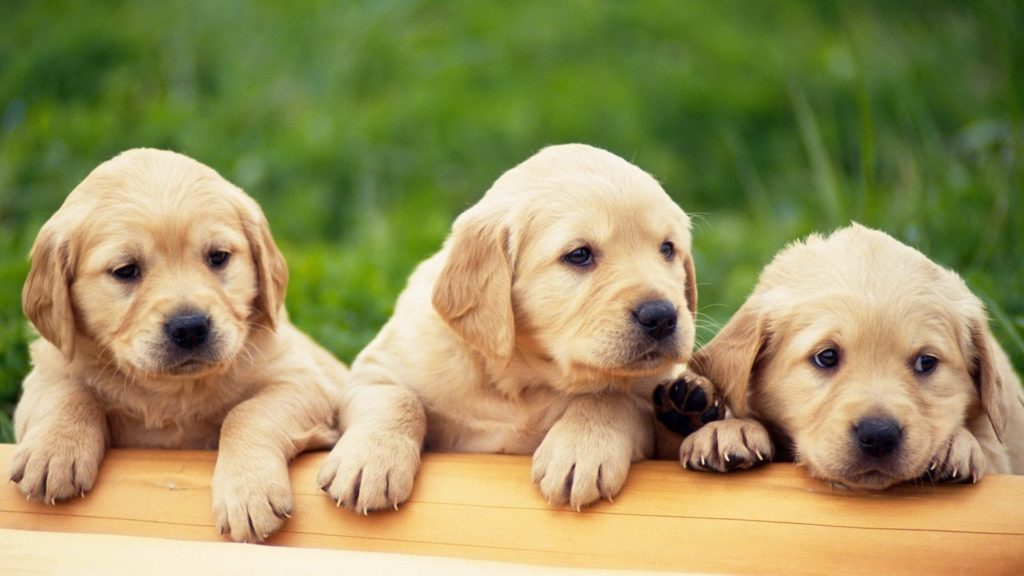 cute-pups