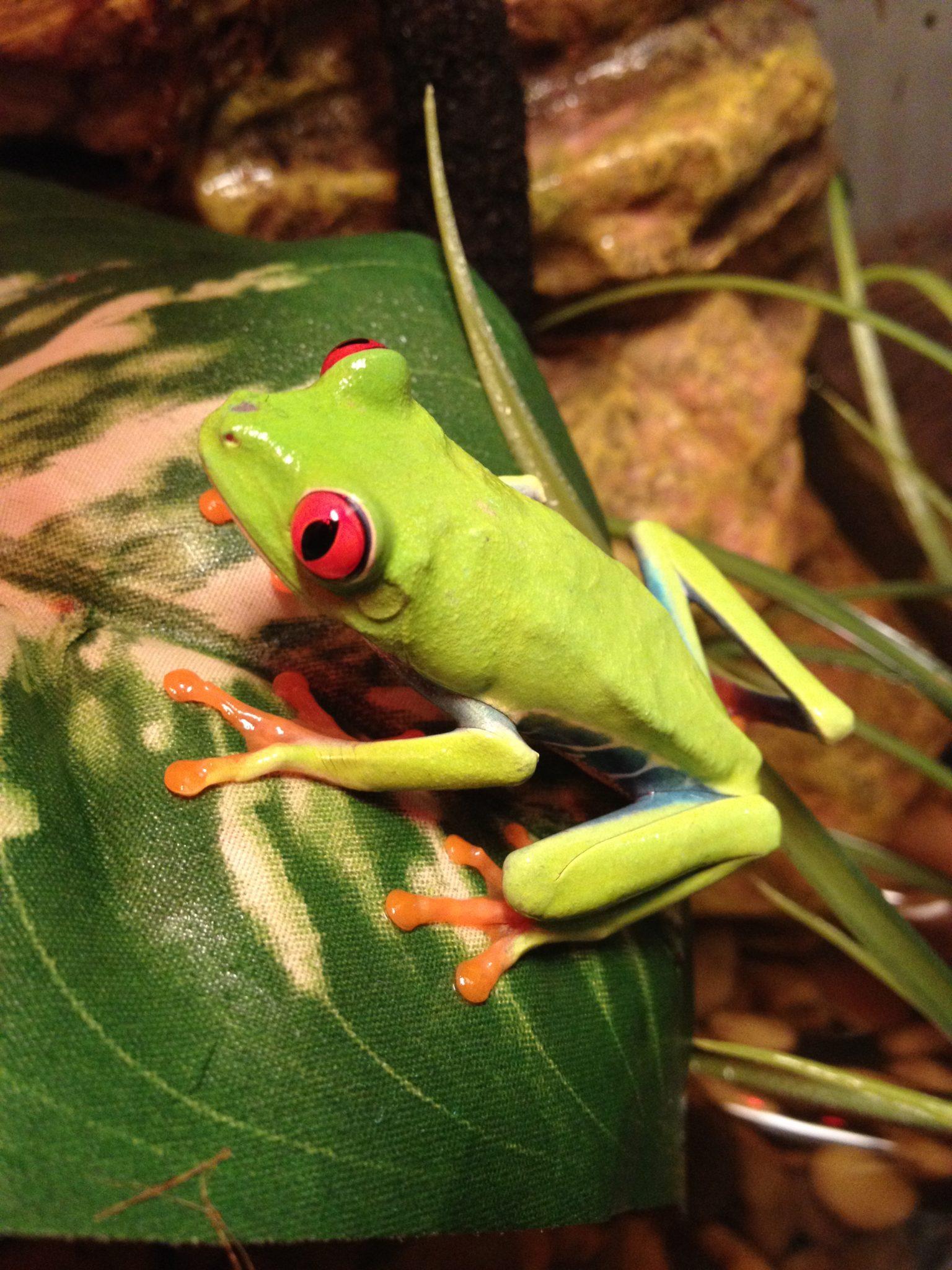 frog-pet