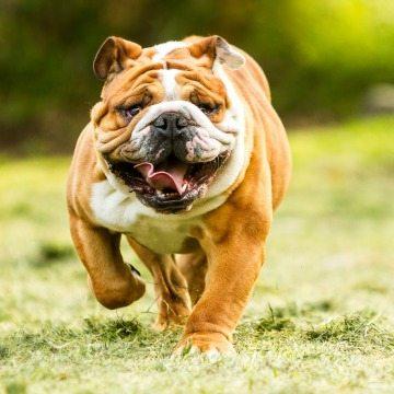 1-friendly-dog-breeds-families-children