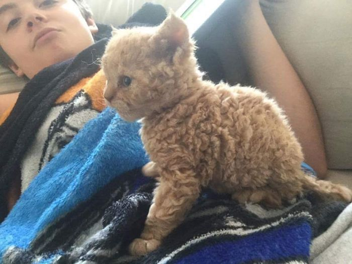 curly-kittens-1