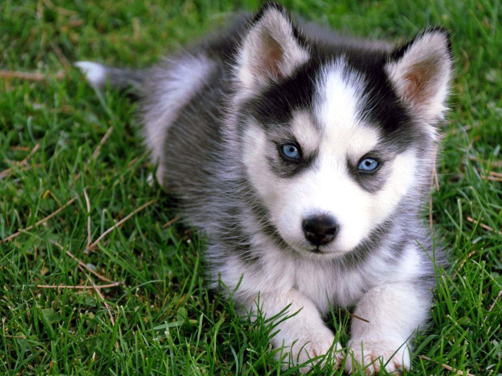 cute-dog's-eyes-1