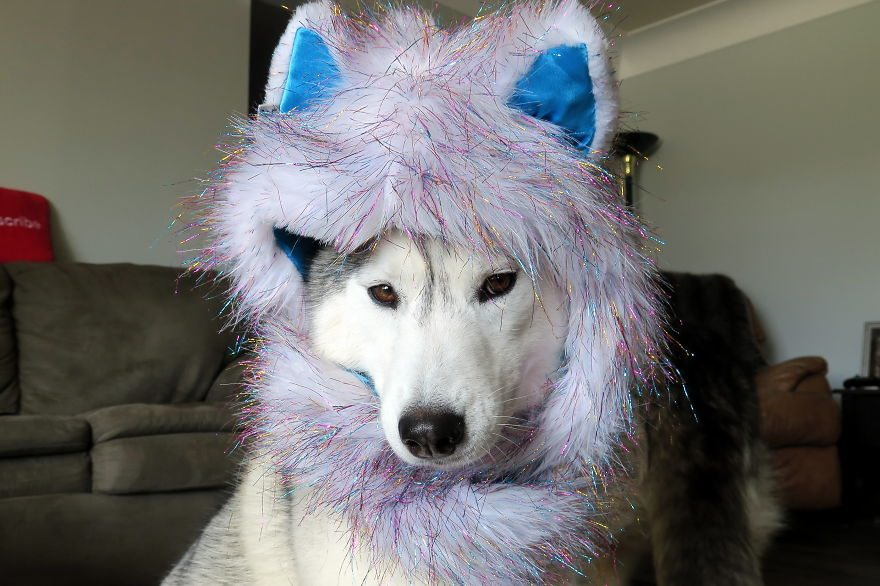 dog-cosplay-1
