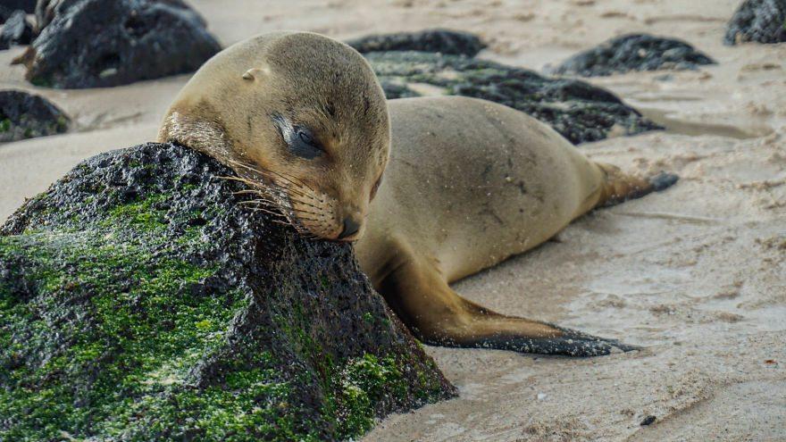 sea-lions-7