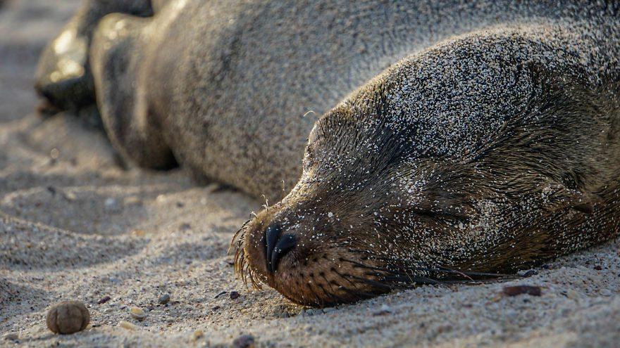sea-lions-8
