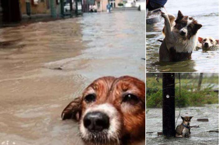 1-hurricane-irma-animals-endangered
