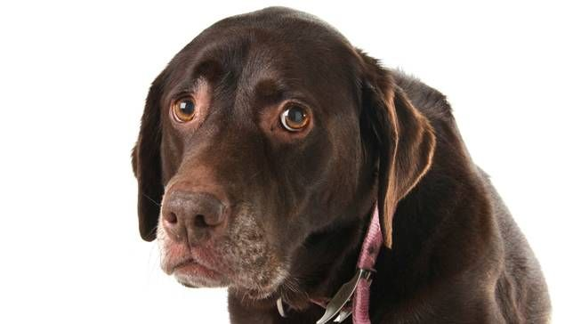 1-things-you-do-that-your-dog-hates