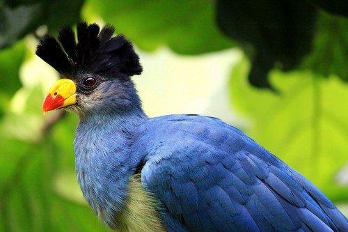 beautiful-birds-1