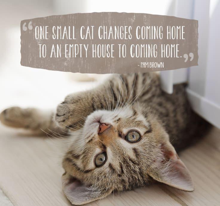 cat-quotes-1
