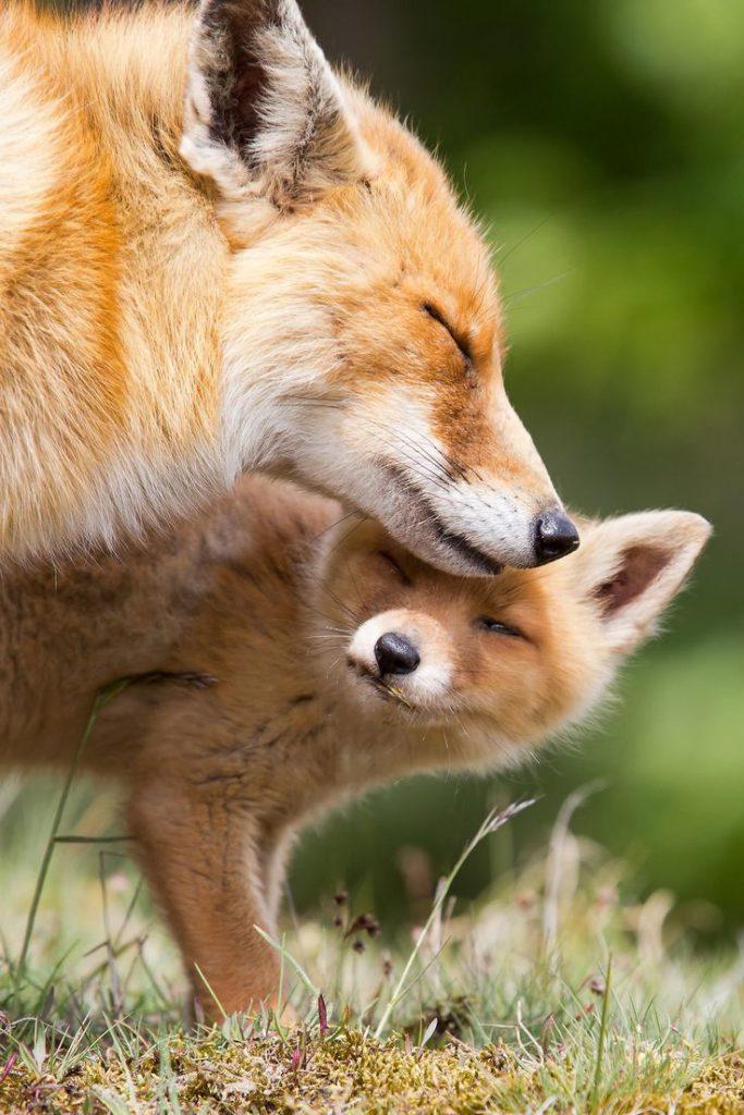 fox-facts-8