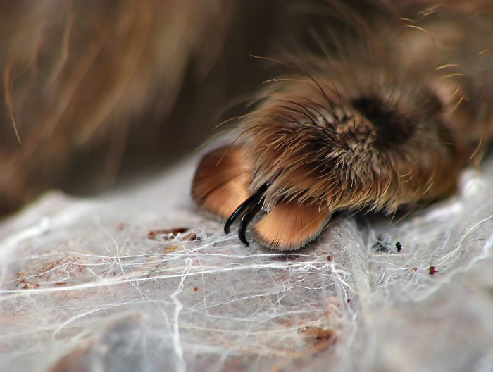 spider-paws-5