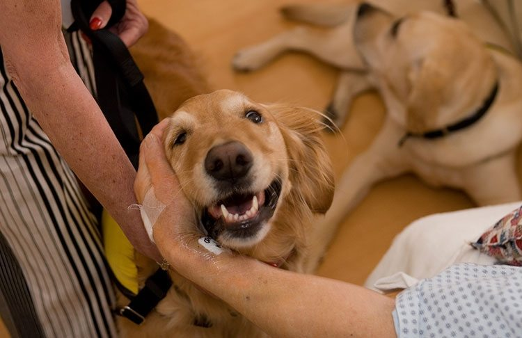 1-health-benefits-of-owning-a-pet