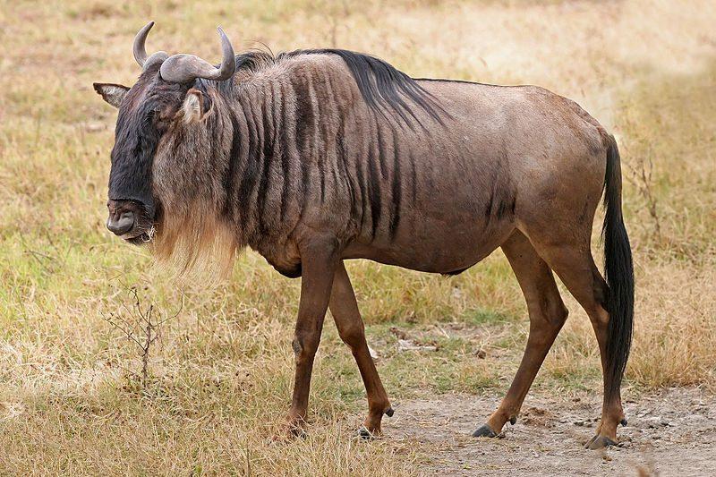2-fastest-animals-in-the-world