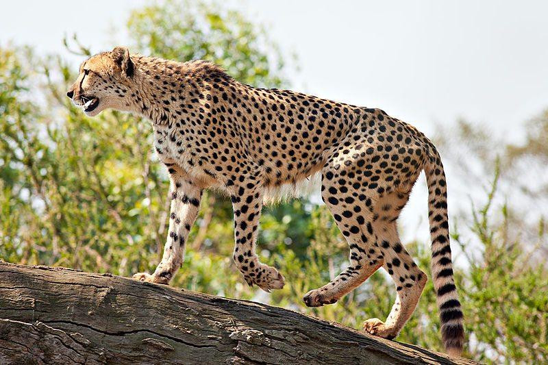 5-fastest-animals-in-the-world