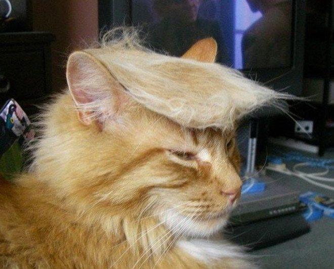 Donald-Trump-Cat-1
