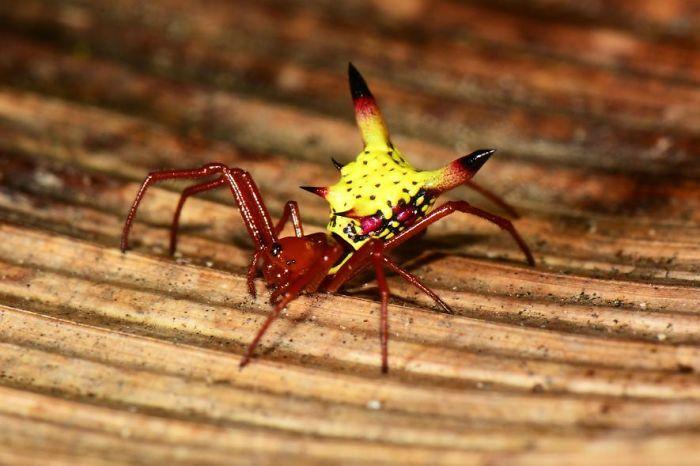 pikachu-spider-1