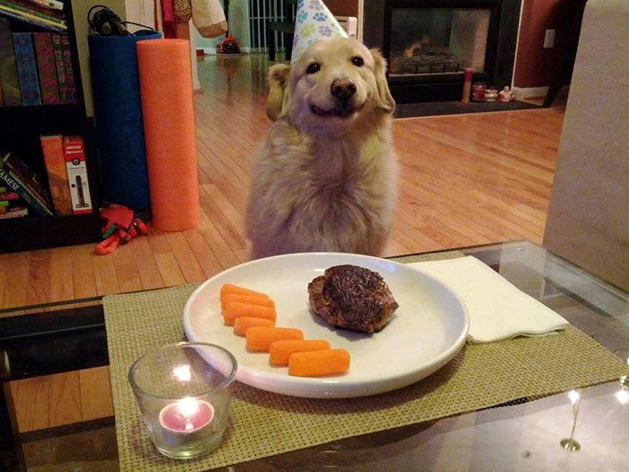 1-animals-with-flawless-birthday-parties